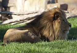 bioparc-valencia-leon